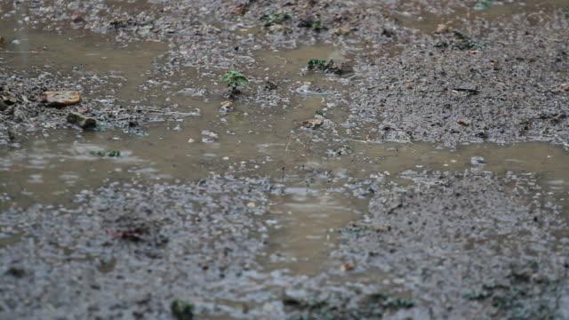 vidéos et rushes de neige sur la terre étage de la saison des pluies en thaïlande - transylvanie