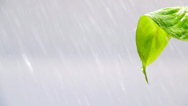 raining on green leaves, slow motion - named wilderness area stock videos & royalty-free footage
