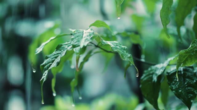 Raining On Green Leaves