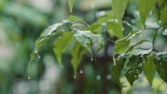 raining on green leaves - torrential rain stock videos & royalty-free footage