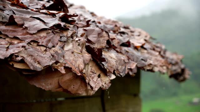 ms raining on leaf roof hut, north thailand. - june stock videos & royalty-free footage