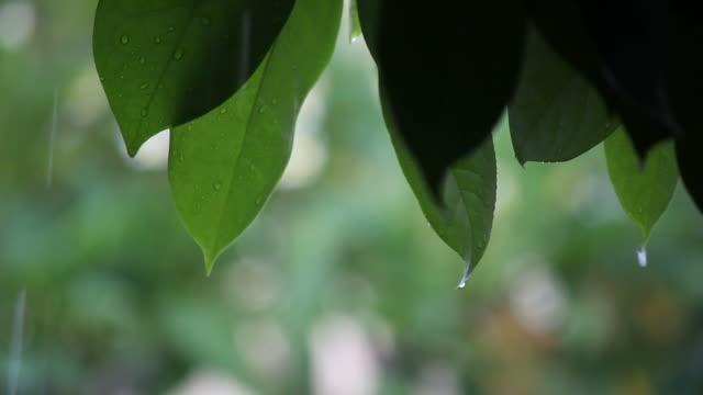 vídeos y material grabado en eventos de stock de raining en hoja. - buena condición