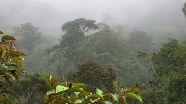 ws rainstorm falling in rainforest/ manu national park, peru - amazon rainforest stock videos and b-roll footage