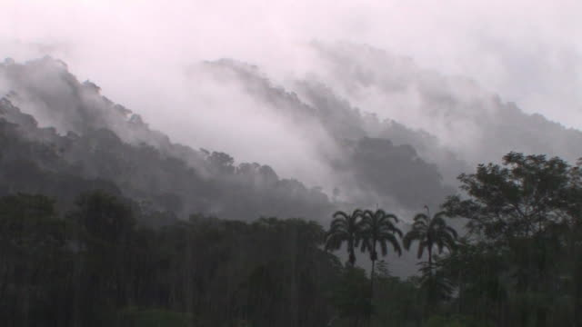 WS rainstorm in misty rainforest/ Manu National Park, Peru