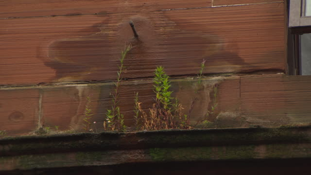 Rainwater drips onto stonework and weeds sprouting from a ledge on a tenement building in Govan, Glasgow, Scotland.