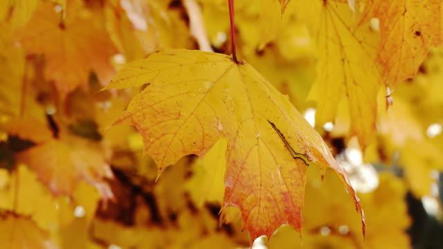 hd :雨の日にある秋の森 - 紅葉点の映像素材/bロール