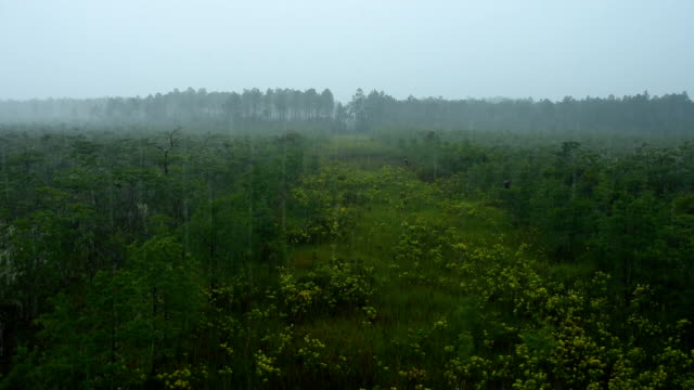 rainy day on restored wetland area - national forest stock videos and b-roll footage