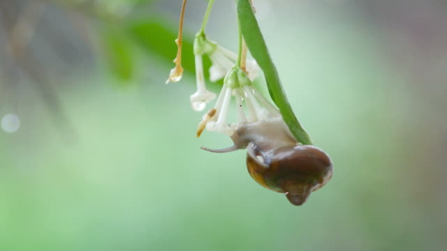 rainy day , snail on leaf
