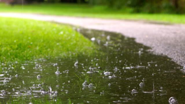 rainy days in toronto park - raindrop stock videos & royalty-free footage