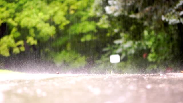 rainy days in toronto park - ash tree stock videos & royalty-free footage