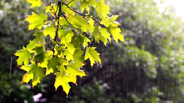 rainy days in toronto park - public park video stock e b–roll