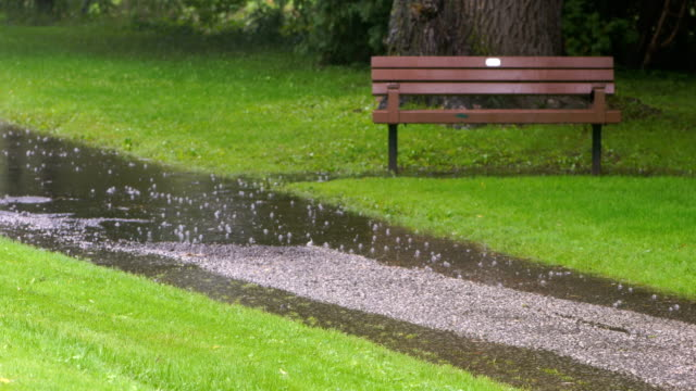 rainy days in toronto park - natural parkland stock videos & royalty-free footage