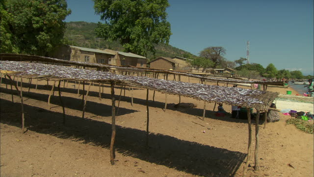 raised beds of drying fish stand on the shoreline of lake malawi. - seafood stock videos & royalty-free footage