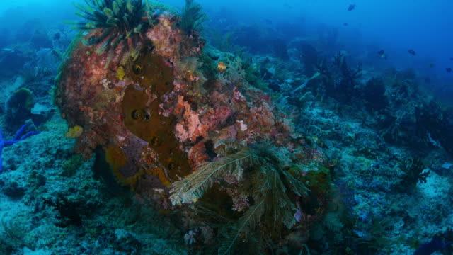 vídeos y material grabado en eventos de stock de raja ampat, arrecife de coral, submarinos - protección de fauna salvaje