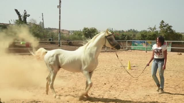 raja kheir is a rare breed an arab woman taking the reins to tame and train horses on the golan heights - tame stock videos and b-roll footage