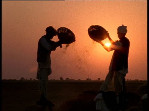 stockvideo's en b-roll-footage met rajasthani farmers silhouetted against orange sunset winnowing wheat from small baskets, rajasthan - cereal plant