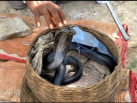 rajasthani indian snake charmer 2 - wind instrument stock videos & royalty-free footage