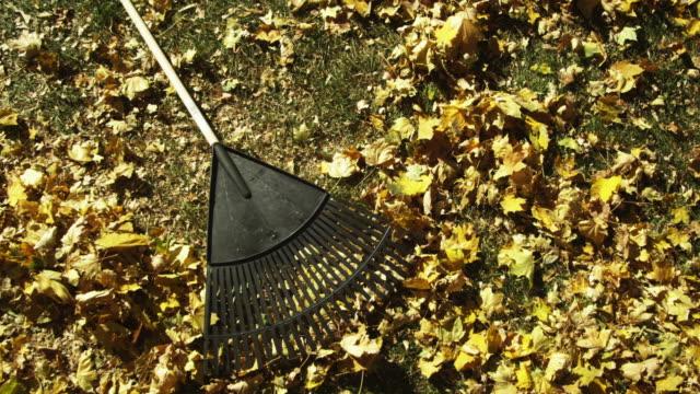 ms zo ha rake lying on autumn leaves / provo, utah, usa - provo stock videos & royalty-free footage