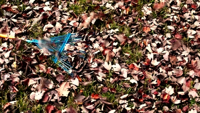 vídeos de stock e filmes b-roll de raking autumn leaves in back yard. - ancinho equipamento de jardinagem