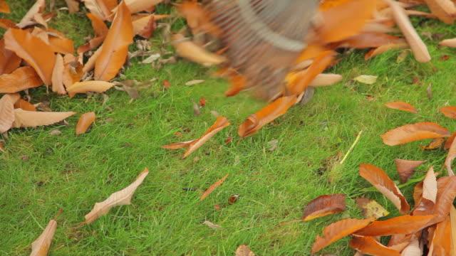 vídeos de stock e filmes b-roll de raking outono folhas - ancinho equipamento de jardinagem