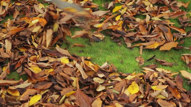 vídeos de stock e filmes b-roll de raking folhas no outono - ancinho equipamento de jardinagem