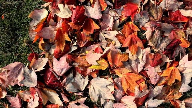 vídeos de stock, filmes e b-roll de raking folhas - folha
