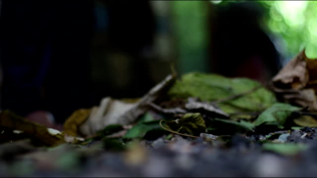 vídeos de stock e filmes b-roll de raking the leaves in the garden - ancinho equipamento de jardinagem
