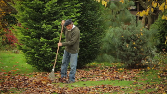 vídeos de stock e filmes b-roll de raking - ancinho equipamento de jardinagem