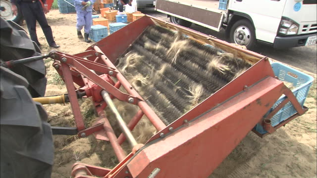rakkyo harvest, tottori, japan - onion stock videos & royalty-free footage