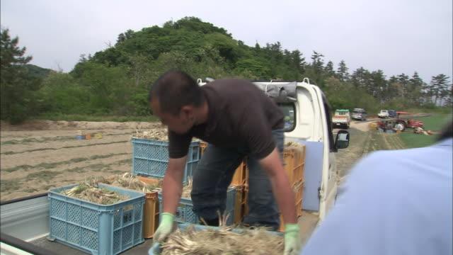 rakkyo harvest, tottori, japan - loading stock videos & royalty-free footage