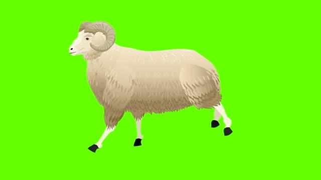 vídeos de stock, filmes e b-roll de animação do ciclo ram run - ovelha mamífero ungulado