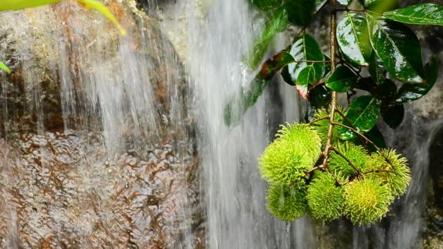 vídeos de stock e filmes b-roll de rambutan perto de cascata - lichia