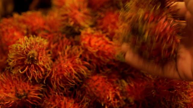 vídeos de stock e filmes b-roll de rambutan - lichia