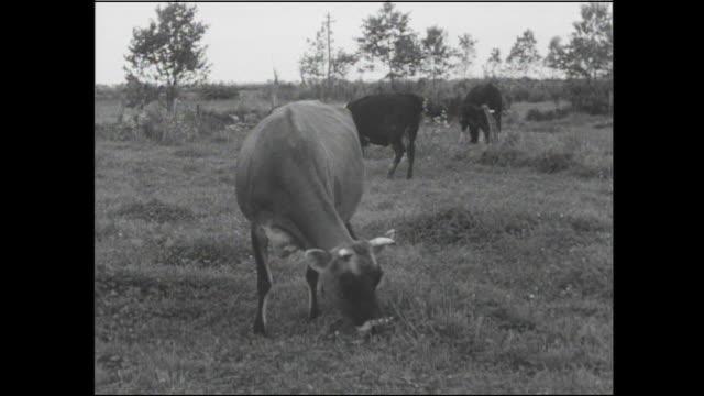 ranch hands unload fodder near grazing cattle in hokkaido, japan. - farm worker stock videos & royalty-free footage