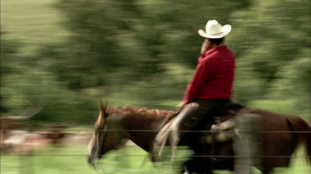a rancher answers a cell phone as he rides his horse in a pasture with long-horn cattle. available in hd. - 農林水産関係の職業点の映像素材/bロール