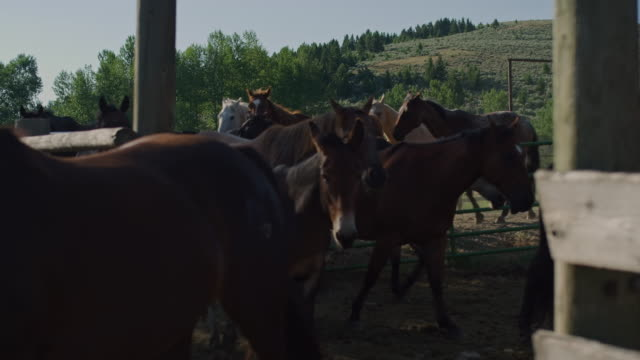 rancher corraling horses 2 - corral stock videos & royalty-free footage
