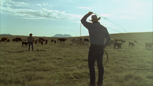 ws rancher getting ready to rope calf / marfa, texas, usa - cowboy stock videos & royalty-free footage