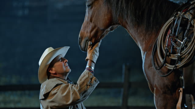 slo mo tu rancher kneeling in front of his horse - rancher stock videos & royalty-free footage