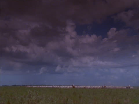 "vidéos et rushes de ranchers herd cattle in a vast field beneath a cloudy sky. - ""bbc natural history"""