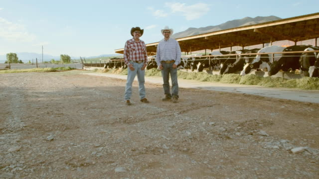 ranchers on a dairy farm - rancher stock videos & royalty-free footage