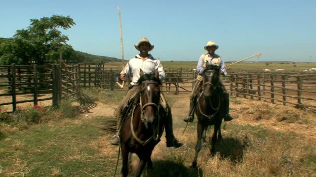 ws pan ranchers riding their horses towards camera / alberese, tuscany, italy - arbetsdjur bildbanksvideor och videomaterial från bakom kulisserna