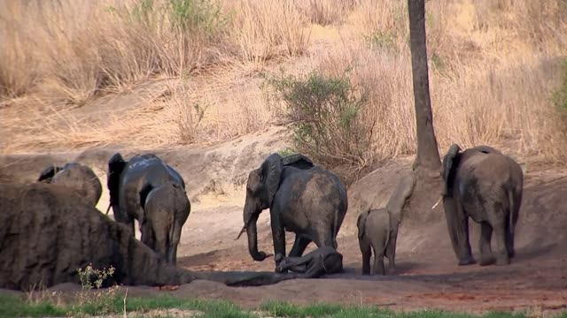 Rangers in project backed by British aid were 'complicit in slaughter of elephants' TANZANIA Ruaha National Park EXT Dr Colin Beale interview SOT...