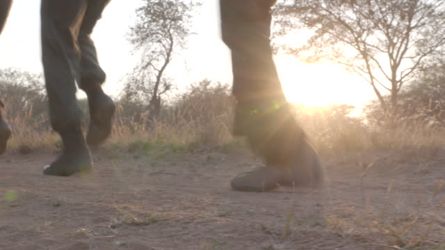 stockvideo's en b-roll-footage met rangers training to combat rhino poaching, south africa - militaire training