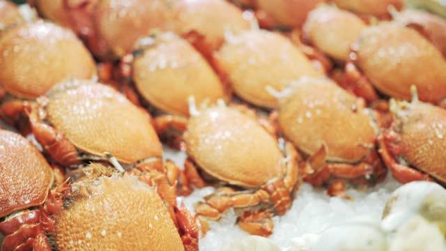 ranina ranina - crab stock videos & royalty-free footage