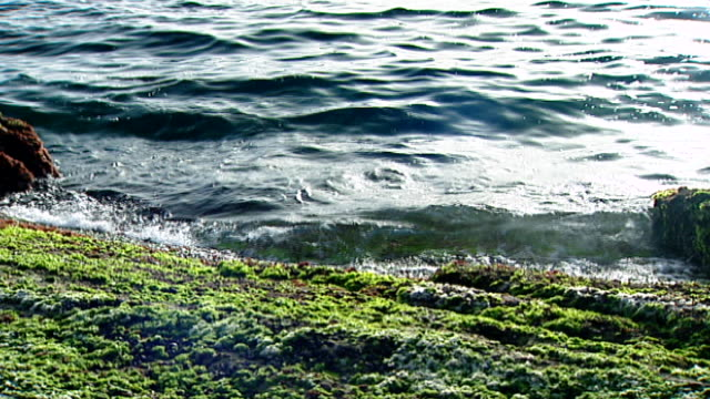 raouche, beirut. mcu shot of small waves lapping at a beach rock covered with kelp. - kelp stock videos & royalty-free footage