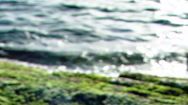 raouche, beirut. rack-focus shot of small waves lapping at a beach rock covered with kelp. - kelp stock videos & royalty-free footage