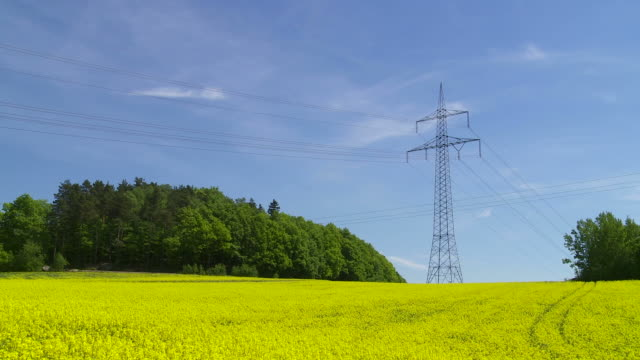 Rape Field and Electricity Pylon (Time Lapse)
