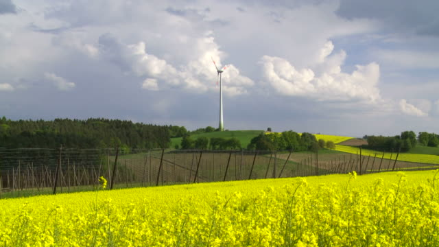 HD Rape Field in Front of a Wind Turbine