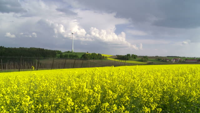 Rape Field in Front of a Wind Turbine