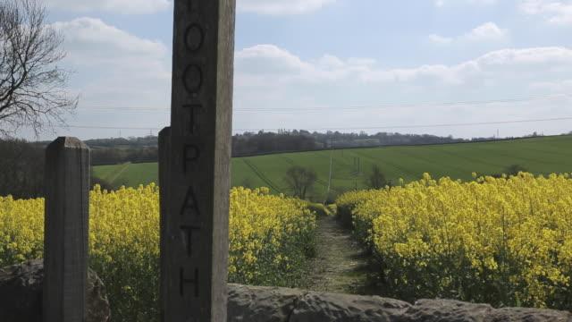 rape field & stile near heath, derbyshire, england, uk, europe - crucifers 個影片檔及 b 捲影像